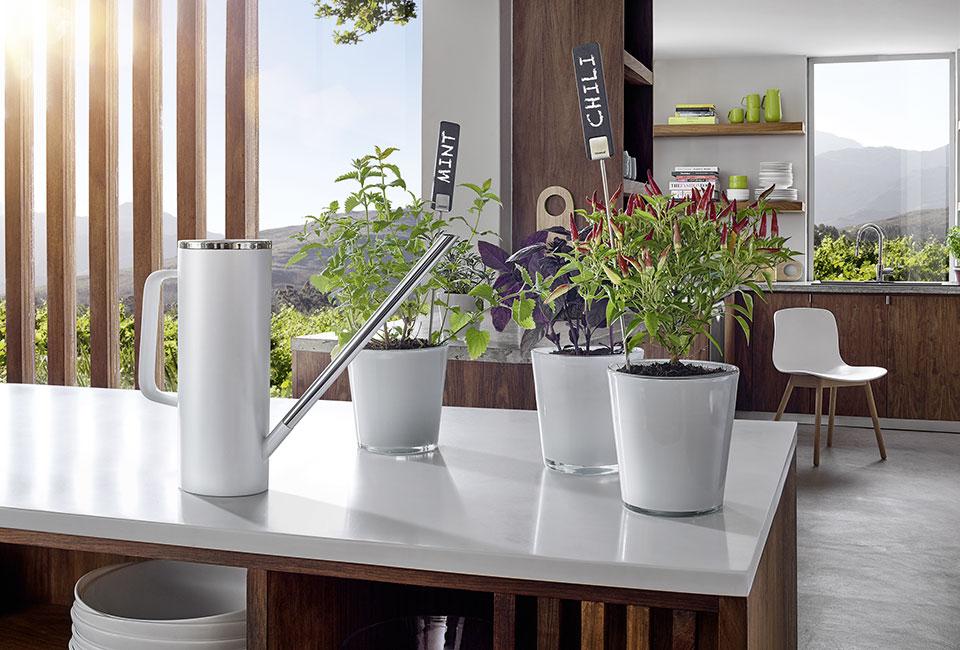marx Holzhandel | Blomus Pure Garden Planta Limbo | Neuried bei Straßburg